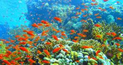 Mối quan hệ của san hô với đa dạng sinh học và biến đổi khí hậu