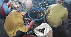 Kết quả can thiệp phòng chống nhiễm độc chì cho trẻ em thôn Đông Mai