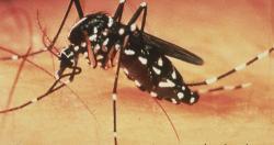 Nguyên nhân, triệu chứng bệnh sốt xuất huyết