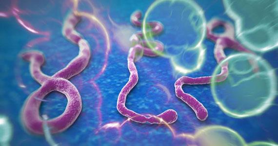 Những dấu hiệu nhận biết và triệu chứng của bệnh do virus Ebola