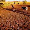 Viện tham gia theo dõi, đánh giá 8 tỉnh hạn hán và xâm nhập mặn