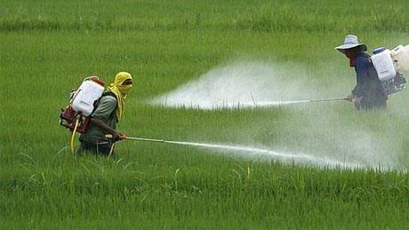 Nỗ lực giảm ảnh hưởng về sức khỏe và môi trường từ thuốc bảo vệ thực vật